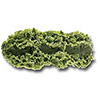 "Salad Bar Kale Replica - 12"" Runner"